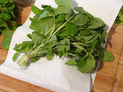 storing basil, mint, coriander